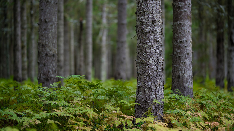 Norweigian Wood 4