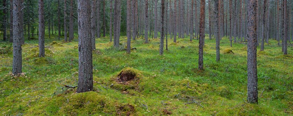 Norweigian Wood