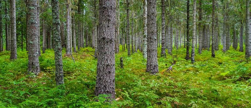 Norweigian Wood 2