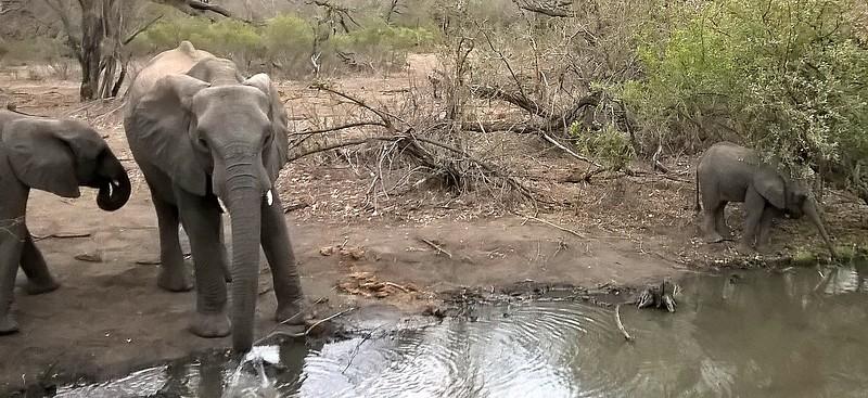 On safari we saw elephants and their young...