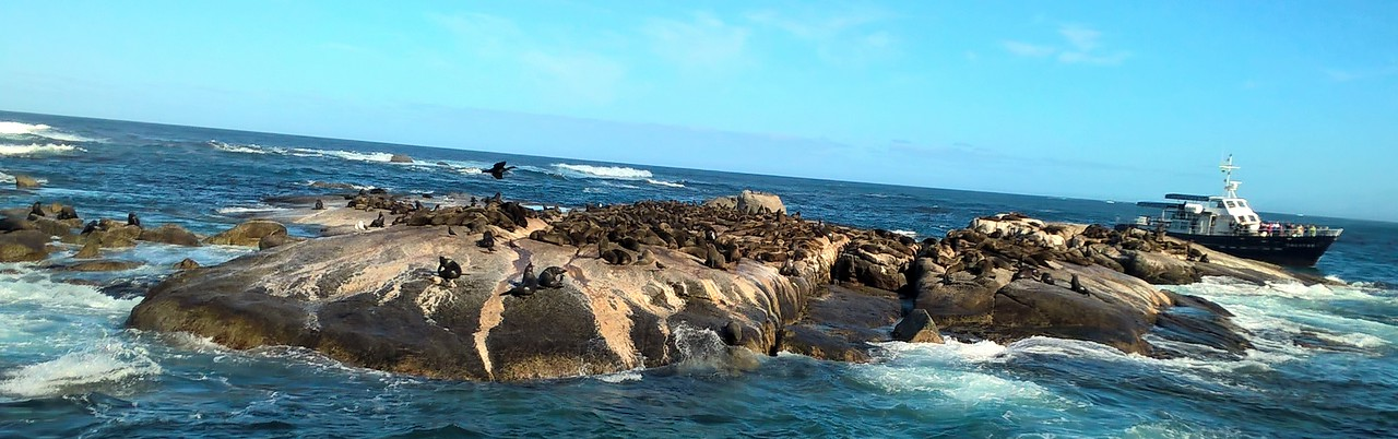We took a boat out to see the colony of Cape Fur Seals.