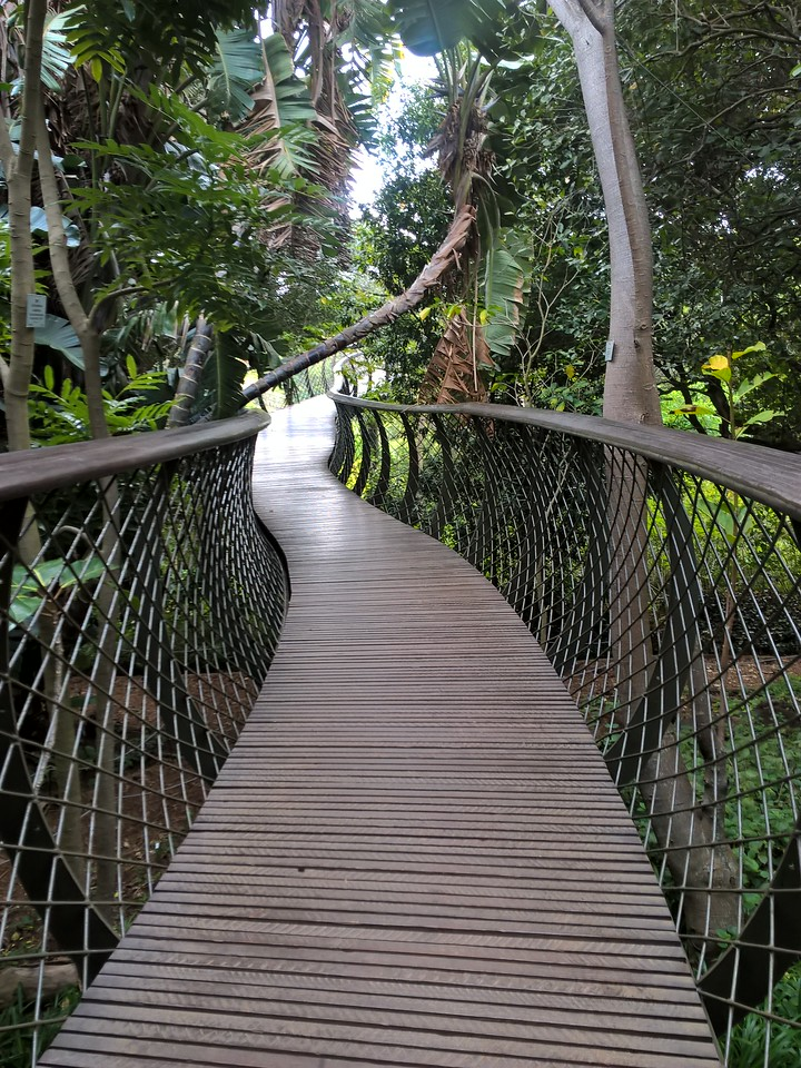 There is even a canopy walk which takes you above the ground and into the treetops.