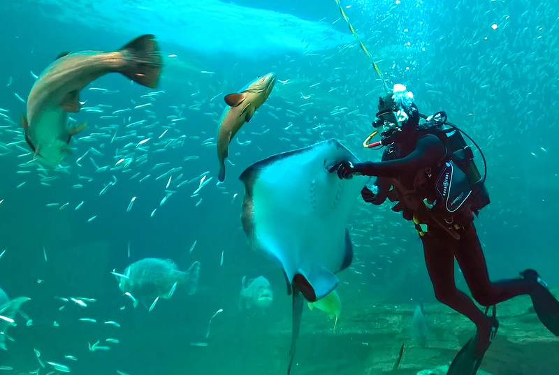 Some of the animals are hand fed but the diver needs to be careful to keep his fingers out of harm's way!