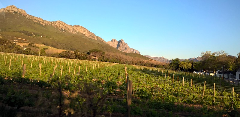 One afternoon we went on an outing to the wine country, Stellenbosch, and tasted wines and toured the town.