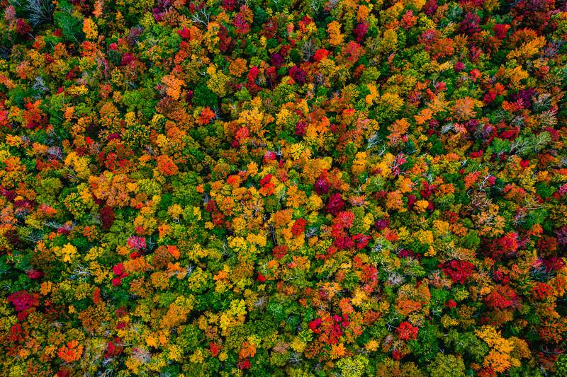 � Vermont