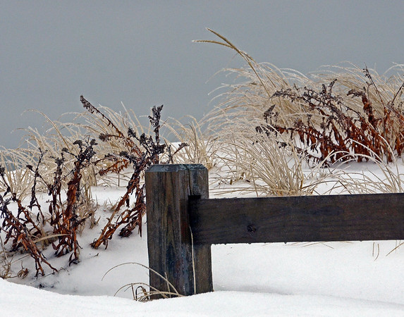 Ice Storm at New Suffolk Beach