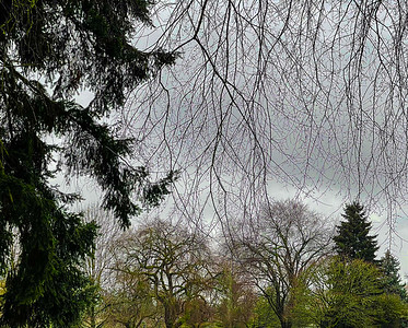 Trees & Hanging Branches, Portland, 2021