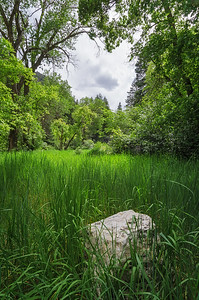 Small Canyon Meadow