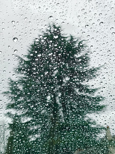 Fir Tree Silhouette Through Rainy Windshield, Portland, 2020