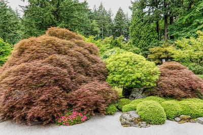 Japanese Maples, Portland