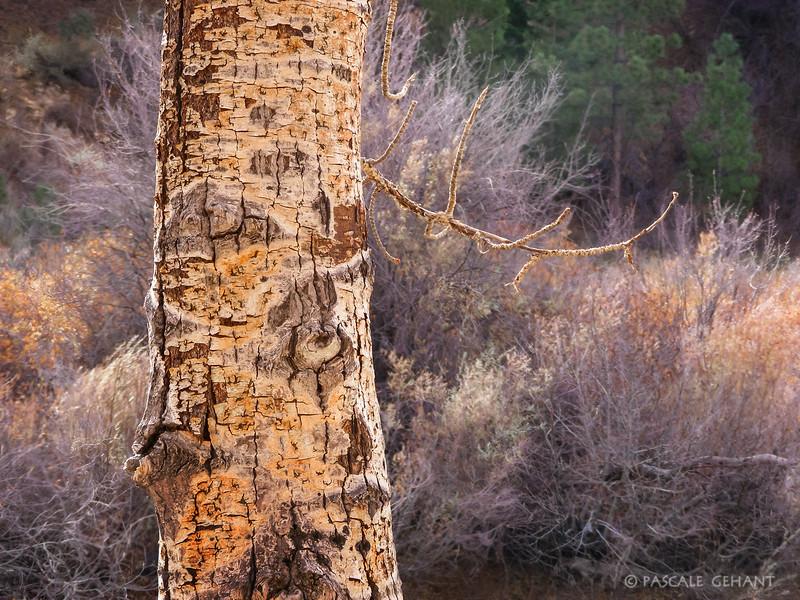 Yellow tree trunk