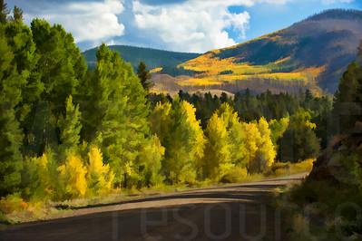 Colorado Fall Foliage 021 | Wall Art Resource