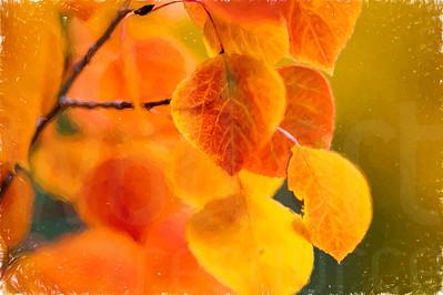Aspen Leaves In Autumn 049 | Wall Art Resource