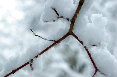 Snowy Branches 004 | Wall Art Resource