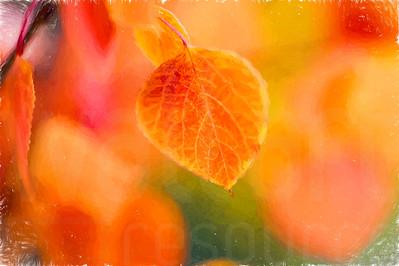 Aspen Leaves In Autumn 045 | Wall Art Resource