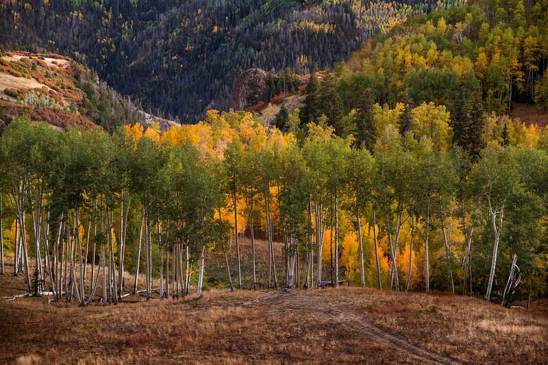 Last Aspen Light