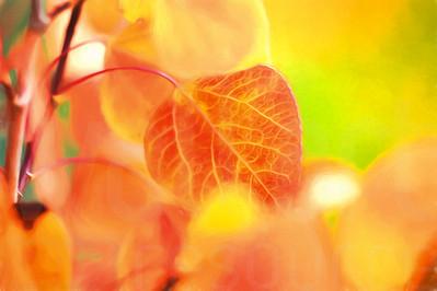 Aspen Leaves In Autumn 052 | Wall Art Resource