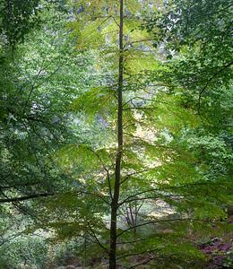 Trees, Arboretum, Portland, 2020-2-2.jpg