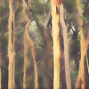 Abstract Australian misty Eucalyptus forest