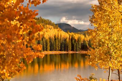 Colorado Fall Foliage 005 | Wall Art Resource