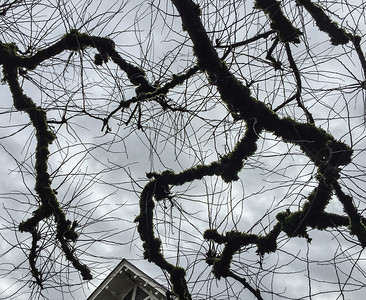 Branches & Roof, Portland, 2016