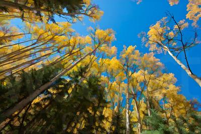 Colorado Fall Foliage 001 | Wall Art Resource