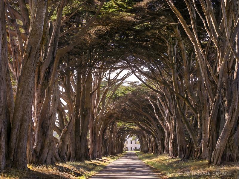 Cypress tree arch