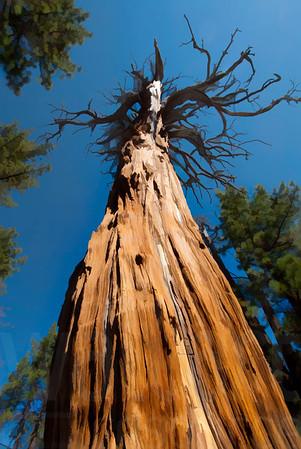 Dead Tree | Wall Art Resource