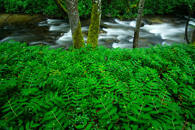 Ashland River and green shrubbery , Lithia Park