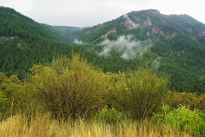 Mist in the Evergreens