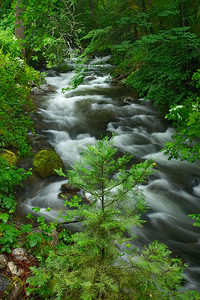 Ashshland River, Lithia Park Oregon