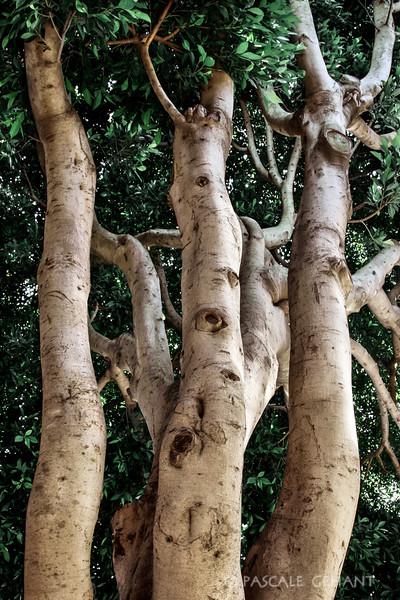 Potatoe skin trees