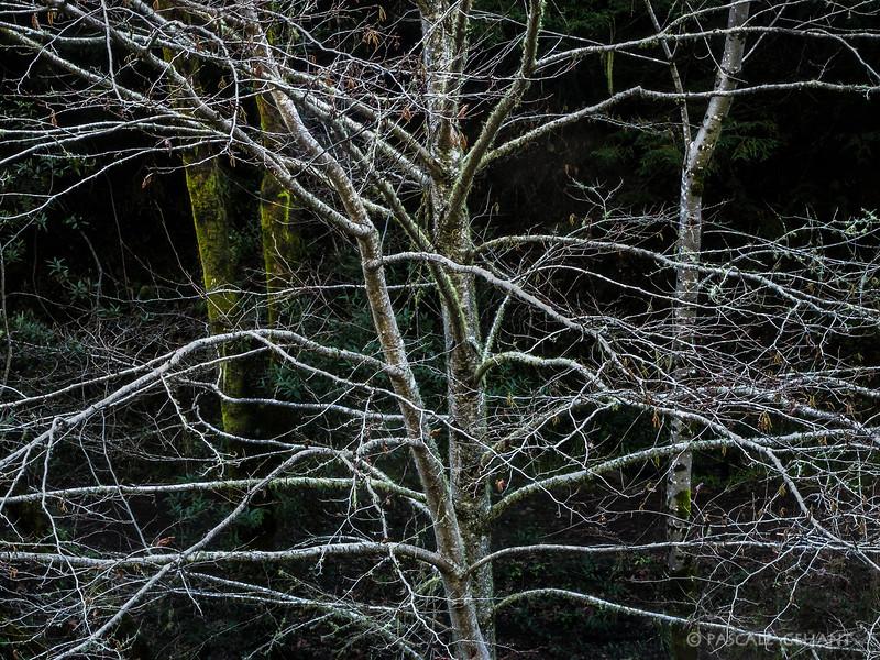 White tree magic