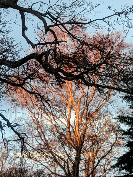 Sunset 🌇 on the silver birch