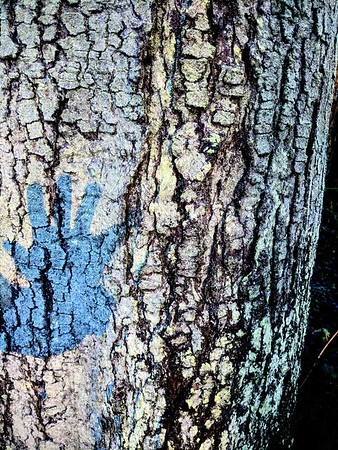 Bark with blue hand shadow