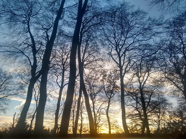 beautiful evening in the woods
