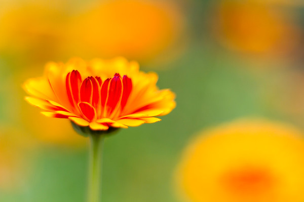Marigold Mornings and Wild Flower Afternoons