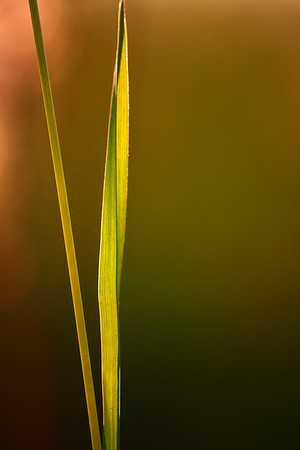 Blades of Grass photographed by Heidi Anne Morris