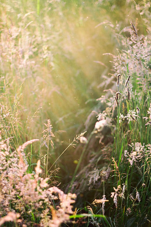 Grass meadow in Summertime