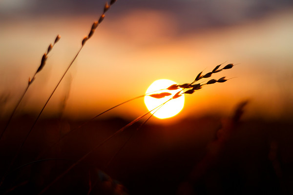 Sunset on a Summer meadow