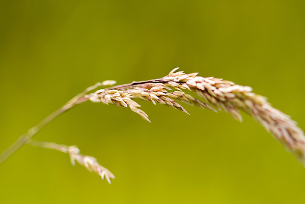 Grass photographed by Heidi Anne Morris