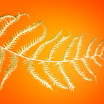 Green Fern Leaf on Orange