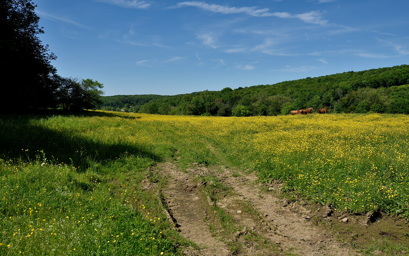 Near Rushford.  Nikon D750 and 16-35mm f/4G VR lens (June 2015).