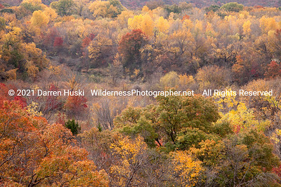 West Fork Forest in Autumn Color