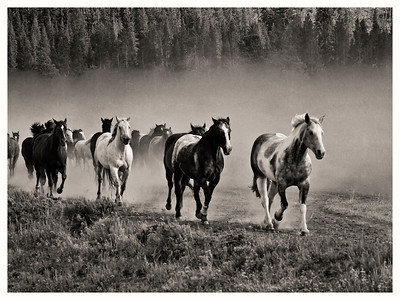 Horses, Triangle X Ranch, WY.