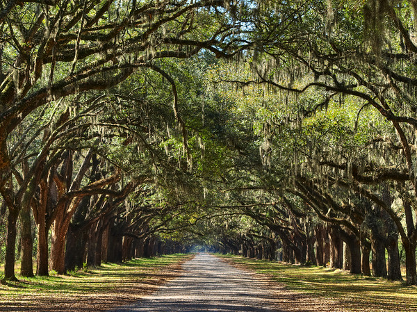 Wormsloe Plantation, Savannah, GA.