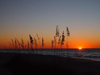 Sunrise and sea oats, St George's Island, FL.