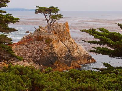 Lone Cypress, 17 Mile Drive, Pebble Beach, CA.