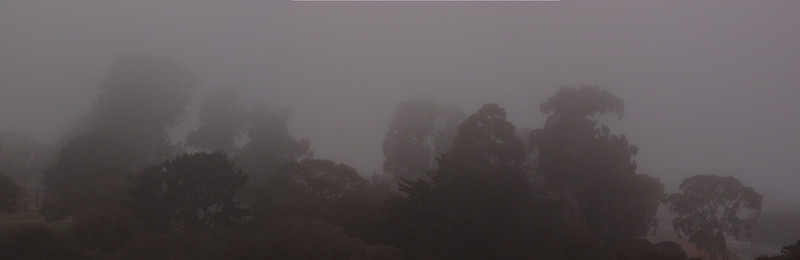 """The fog"", Monterey, CA."