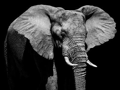 Elephant in Kruger Park, South Africa